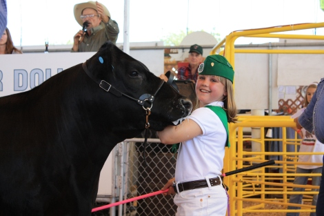 steer-photos-137