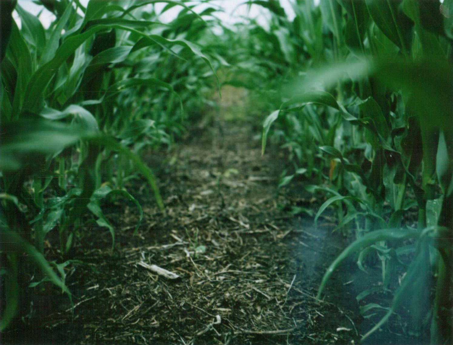 crops1