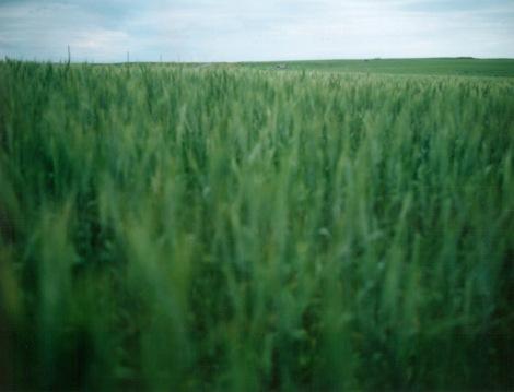 crops4