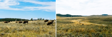 Yellowstone  Blog-10